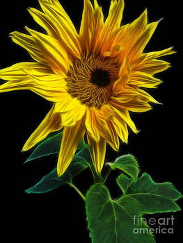 Sunflower by Yvonne Johnstone