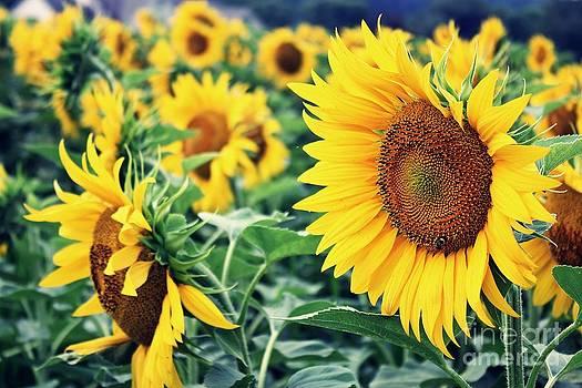 Sunflowerpower by Patrick Rodio
