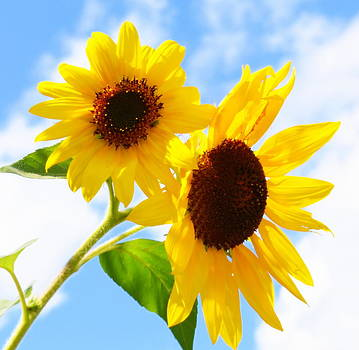Linda Rae Cuthbertson - Sunflowers #1