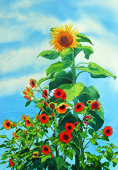 Sunflowers 2014 by Mary Helmreich