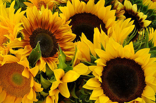 Sunflowers at Union Square Farmers Market by Diane Lent