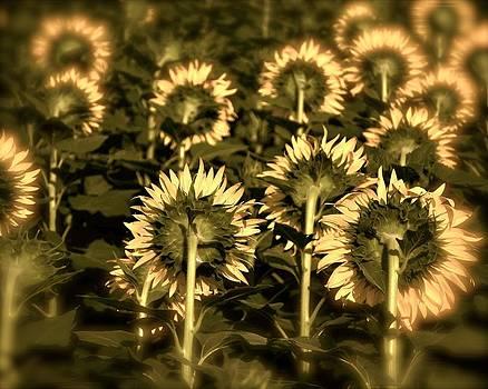 Sunflowers by Ben  Keys Jr