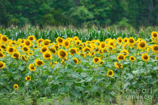 Dale Powell - Sunflowers