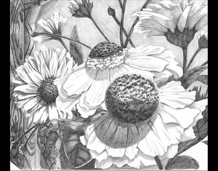 Sunflowers Drawings by Dorian Day
