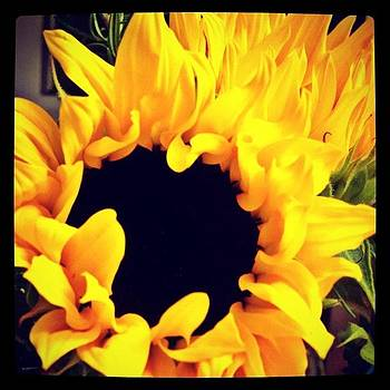 #sunflowers #flower #flowers #yellow by Greta Olivas