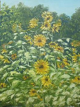 Sunflowers in my garden by Yaroslav Kuvshinov
