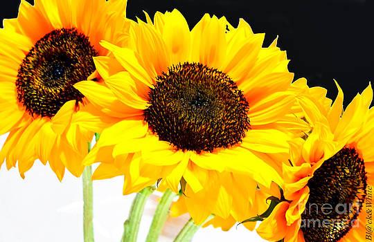 Sunflowers by Ivan Vasquez