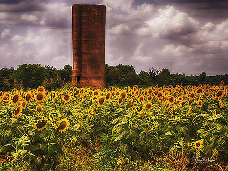 Silo - Flowers - Sunflowers on a Cloudy Day by Barry Jones