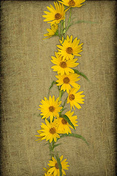 Sunflowers on a gold textured background by Kim M Smith