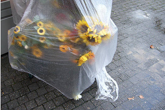 Sunflowers protected against rain by Matthias Hauser
