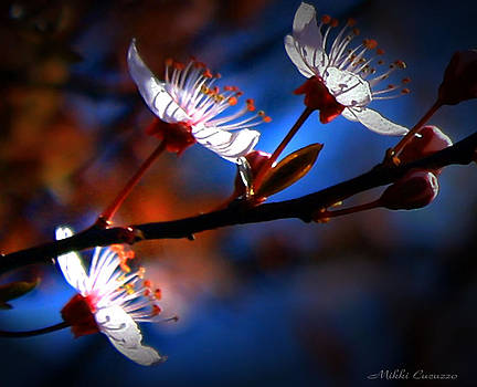 Sunkissed Blossoms by Mikki Cucuzzo