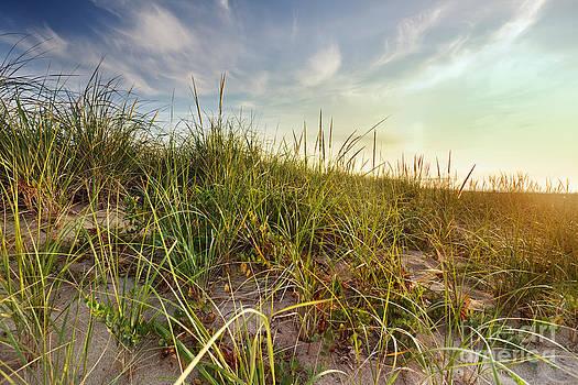 Jo Ann Snover - Sunkissed dune grass