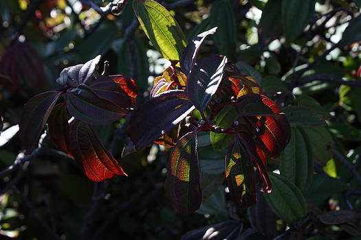 Sunlight and Leaves by Mark Cheney