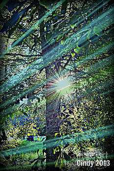 Sunlight  by Cindy Holland