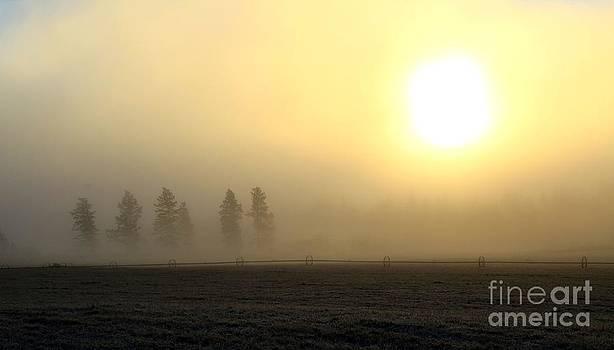 Roland Stanke - sunlight fields