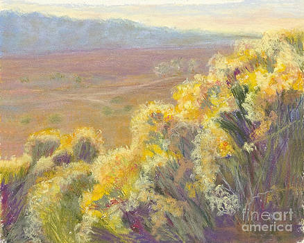 Sunlight on the Chamisa by Patricia Huff