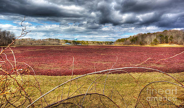 Michelle Wiarda - Sunlight on the Cranberry Bog