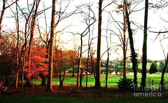 Sunlight on Trees by Jinx Farmer