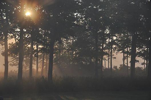 Sunlight Peeking Through by Tanis Crooks