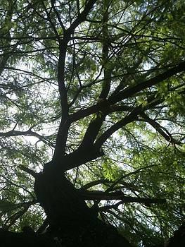Sunlight Through Branches by Jillian ODwyer