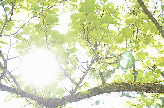 Sunlight through leaves in summer by Sami Sarkis