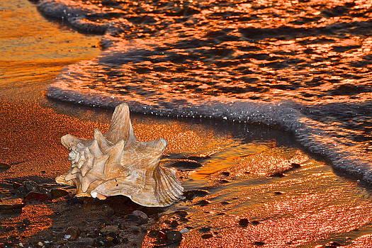 Frozen in Time Fine Art Photography - Sunlights Glow