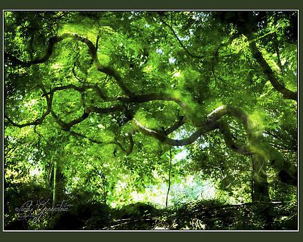 Sunlit Branches by Cindy Greenstein
