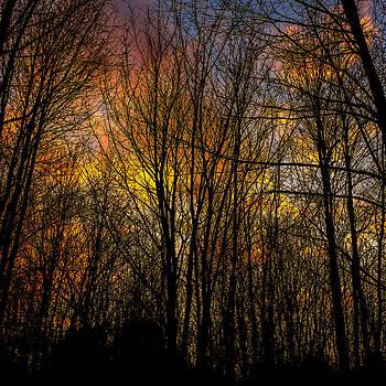 Chris Bordeleau - Sunlit clouds through a leafless forest