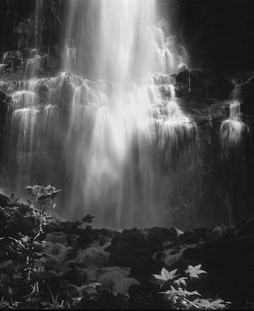 Shirley D Cross - Sunlit Falls
