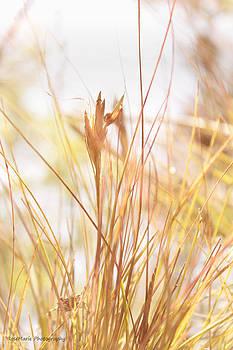 Sunlit Needles by Vanessa Parent