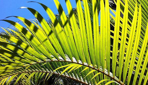 Sunlit Palm Tree  by Prashant Shah