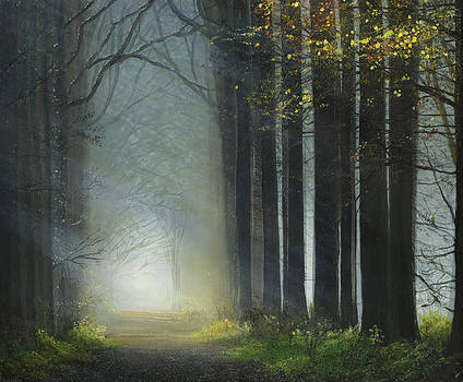 Sunlit Path by Cecilia Brendel