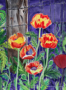 Sunlit Poppies by Heather Stinnett