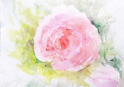 Sunlit Rose by Trilby Cole