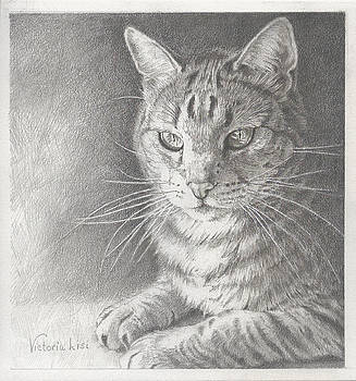 Sunlit Tabby Cat by Victoria Lisi