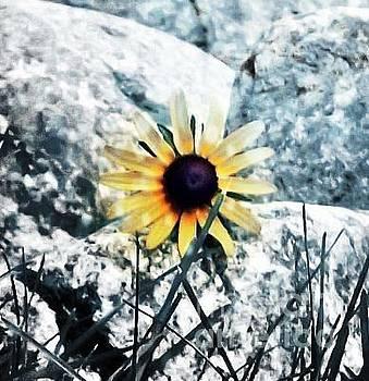 Samantha Radermacher - Sunny daisy