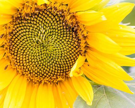 Sunny Day by Mary Underwood