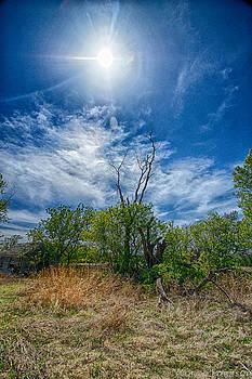 Sunny Days by Yvonne Emerson AKA RavenSoul