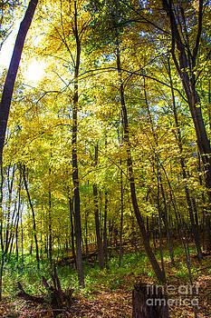 Sunny Fall Day by CJ Benson