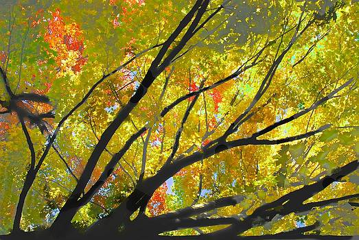 Sunny Fall Day by Larry Bodinson