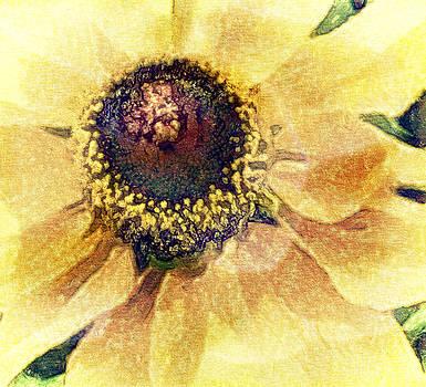 Sunny Flower by Jill Balsam