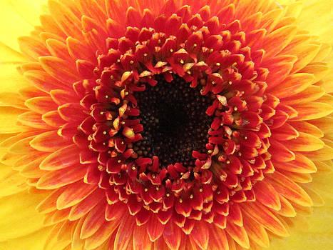 Sunny Flower by Lisa Lieberman