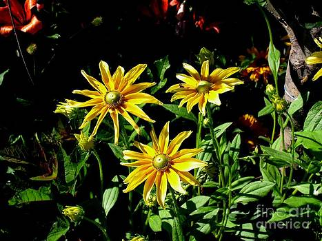 Sunny Flowers by Galina Khlupina