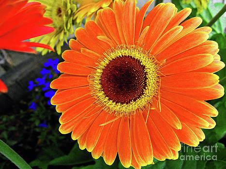 Sunny by Molly McPherson