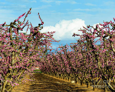 Terry Garvin - Sunny Orchard
