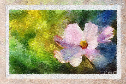 Sunny Pink Cosmos by Teri Brown