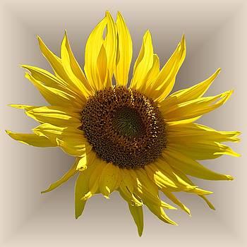 MTBobbins Photography - Sunny Sunflower on Tan