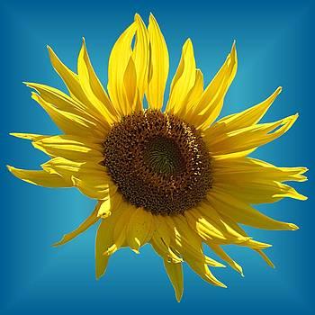 MTBobbins Photography - Sunny Sunflower on Teal Starburst