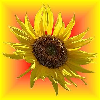 MTBobbins Photography - Sunny Sunflower on Warm Colors