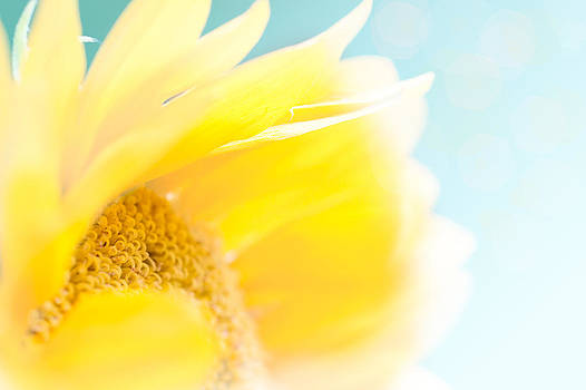 Sunny Sunflower Up Close - Very Shallow Depth of Field by Paula Ohreen